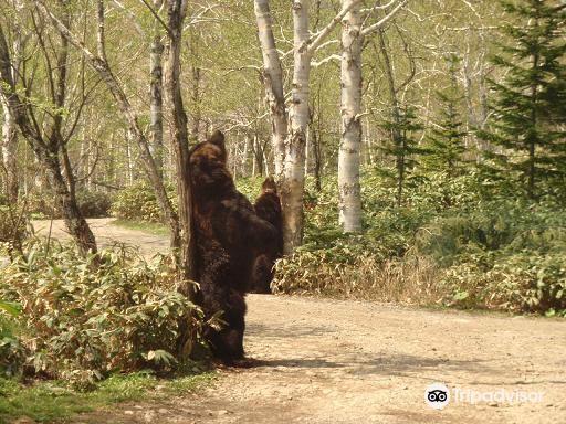 Sahoro Bear Mountain4