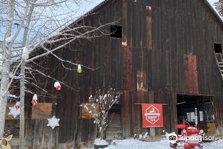 Leavenworth Reindeer Farm2