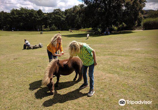 Miniature Pony Centre3