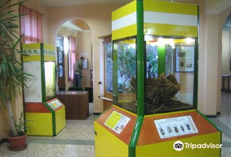 Esapolis - Il Museo degli insetti
