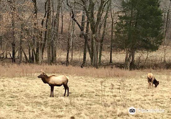 The Elk and Bison Prairie1