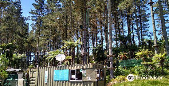Adrenalin Forest2