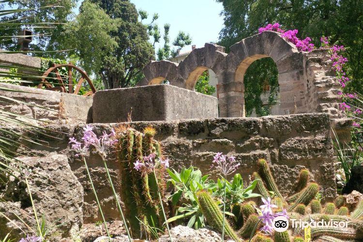 蒙彼利埃植物園3