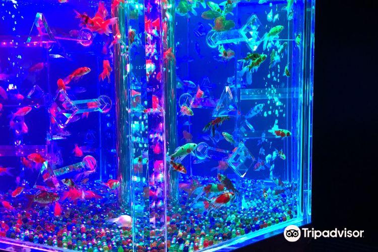 Art Aquarium2
