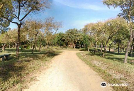 Parque de San Benito