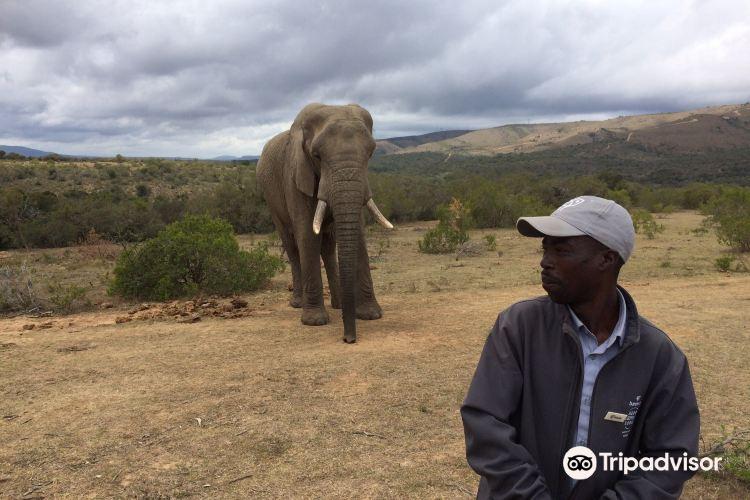 Addo Elephant-Back Safaris and Lodge4