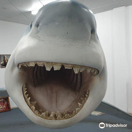 Great White Shark Replica