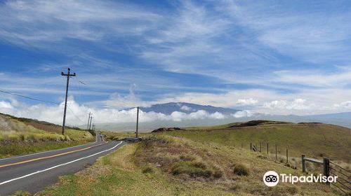 Kohola Mountain Road