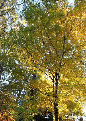 Davis Arboretum2