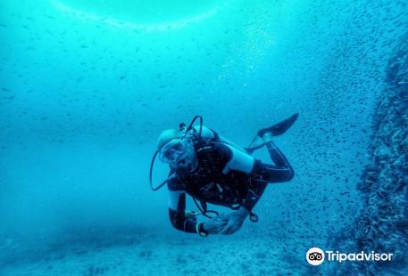 Vitamin Sea Divers