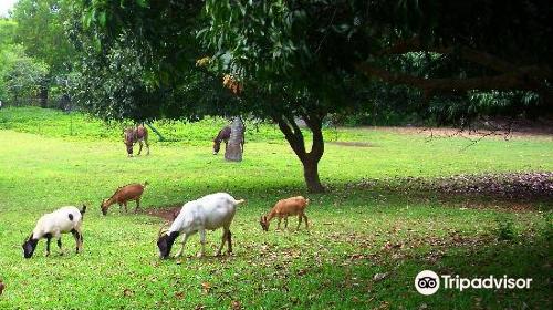 Leilani Farm Sanctuary