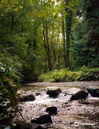 Dun A Ri Forest Park3