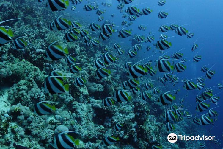 傑克遜礁3