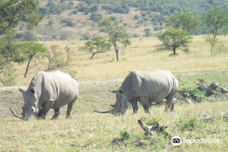 Mpongo私人禁獵區3