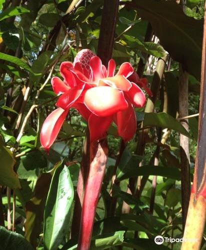 Hana Maui Botanical Gardens3