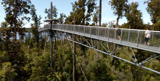 West Coast Treetop Walkway1