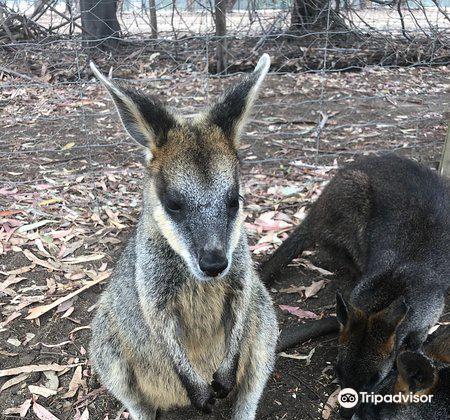 Kangaroo Island Wildlife Park3