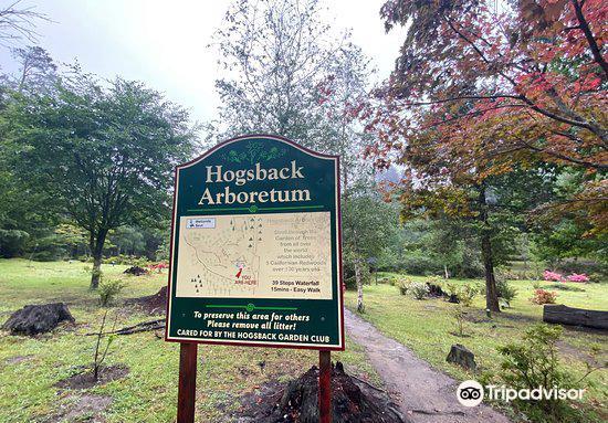Hogsback Arboretum2