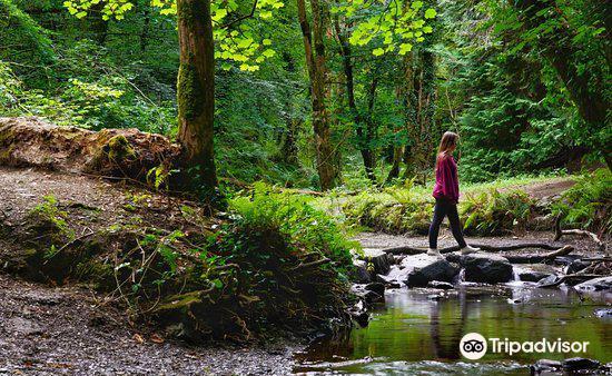Dun A Ri Forest Park1