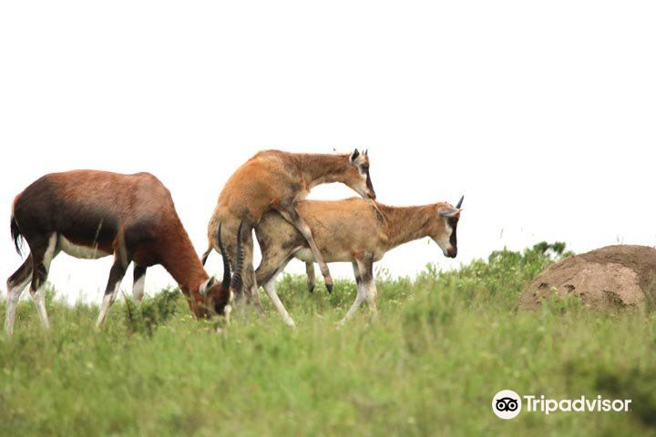 Mpongo私人禁獵區2