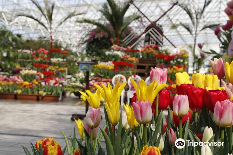 鹿兒島鮮花公園1