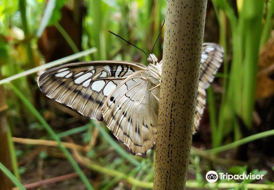 Buckfast Butterfly Farm and Dartmoor Otter Sanctuary4
