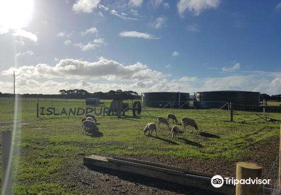 Island Pure Sheep Dairy3
