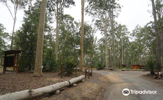 Bodalla Forest Rest Area