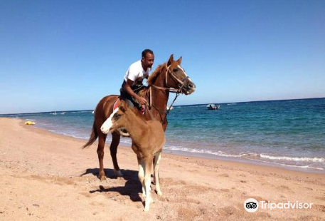 Miso Horse Riding Trips