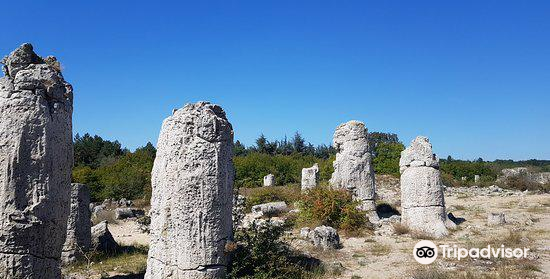 Stone Forest1