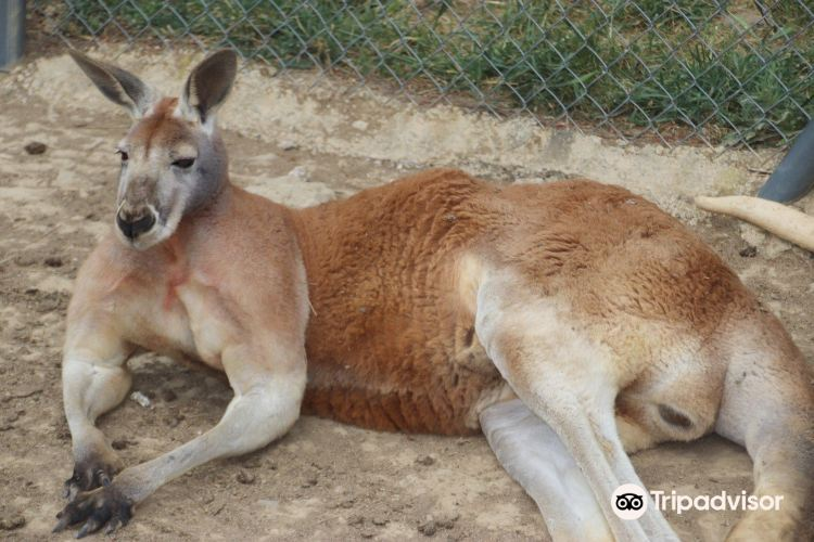 Le Parc Australien4