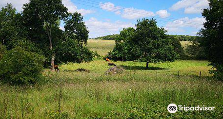 Ladybelt Country Park