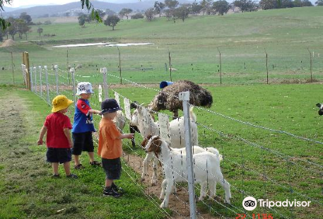 Bathurst Sheep and Cattle Show