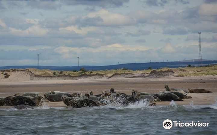Dolphin Spirit Inverness3