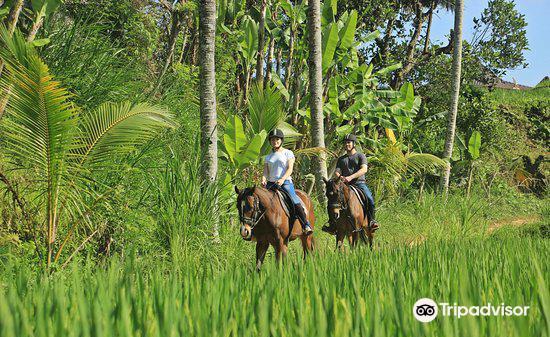 Ubud Horse Stables3