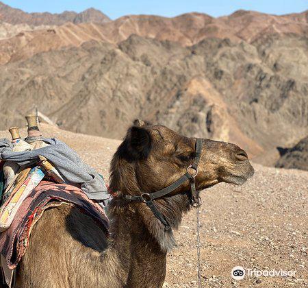 Camel Ranch Eilat3