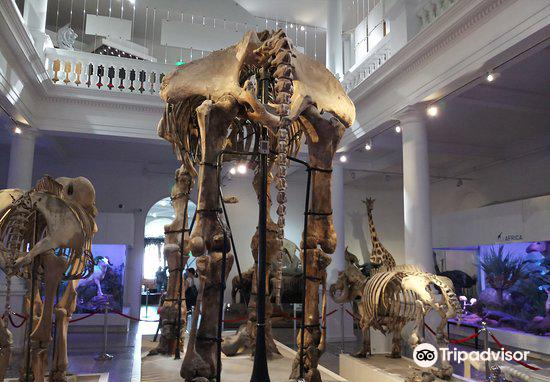 Grigore Antipa National Museum of Natural History3