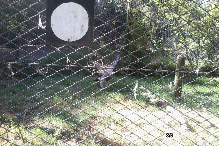 El Paraiso Zoo (Zoologico El Paraiso)2