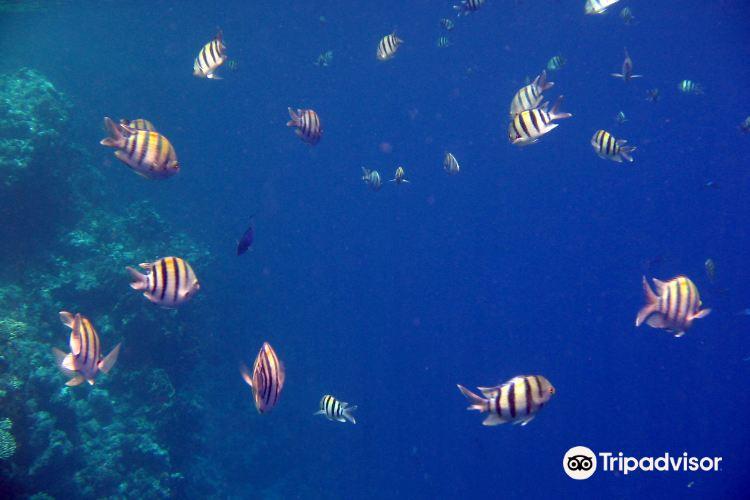 傑克遜礁4