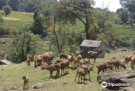 Dhauladhar National Park
