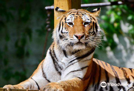 Miskolc Zoo and Culture Park