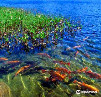 The Goldfish Lake