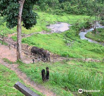 Karen Elephant Habitat