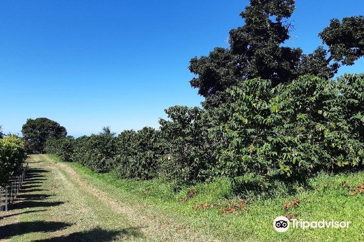 科納咖啡農場4