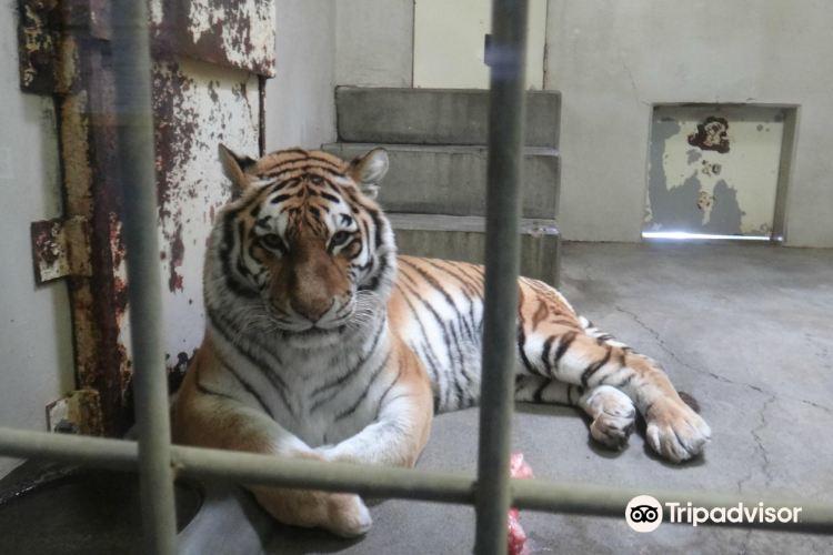 釧路市動物園4