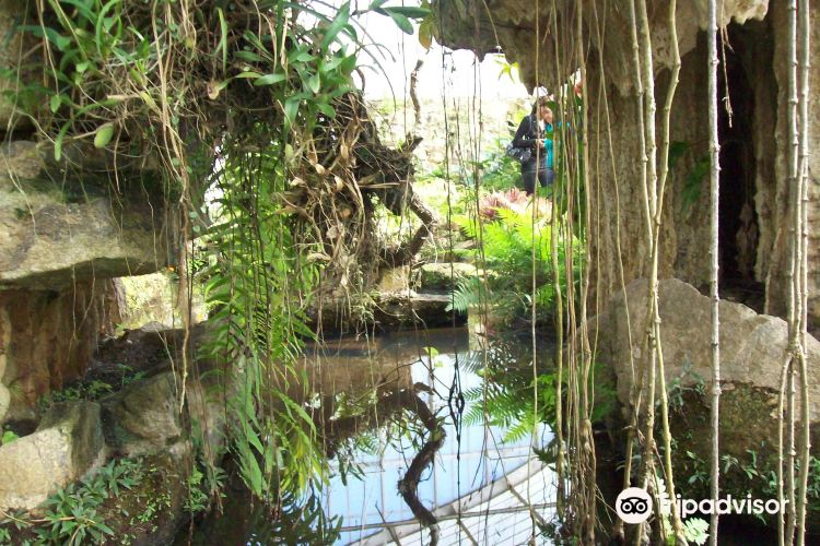 Springs of the Ipiranga State Park