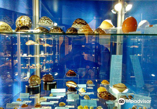 Magical World of Shells Museum1