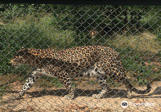 Sajjangarh Wildlife Sanctuary2