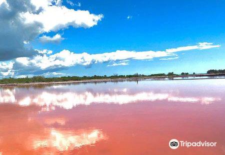Salt Flats and Wildlife Refuge