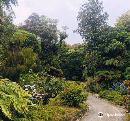 Pukeiti Rhododendron Park1